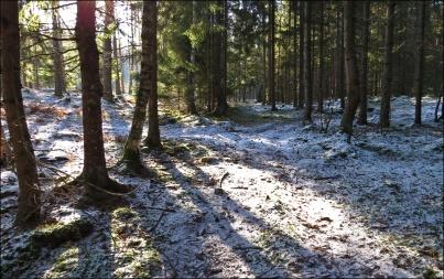... och lite snö kvar i skogen