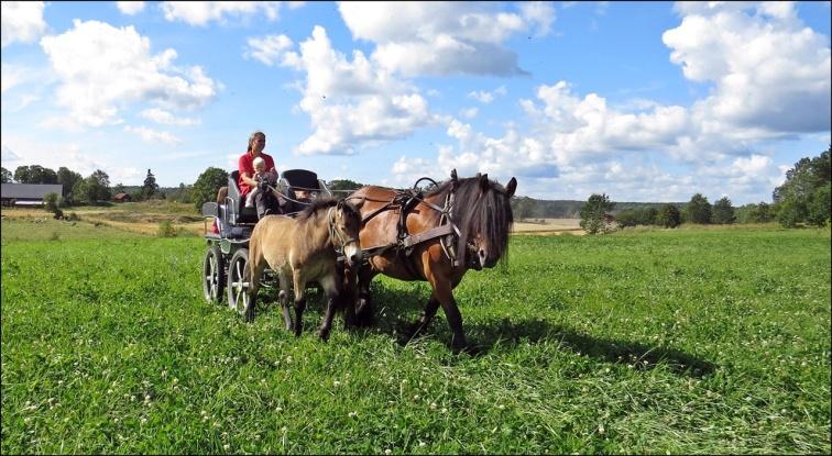 hästdraget fordon...