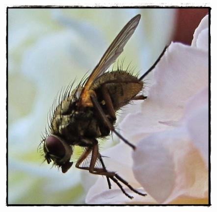 Någon av köttflugorna...