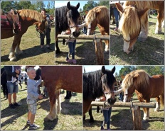 Är man stor, då måste man vara snäll ... Casper klappar hästarna på Lantbruksmuséet i Ljusfallshammar
