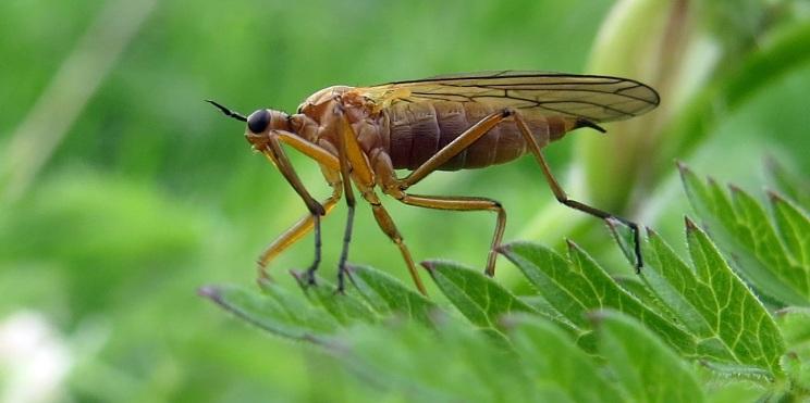 Dansfluga ... någon av de drygt 300 arterna :)