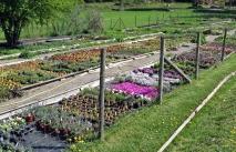 Välordnat och välsorterat i perennträdgården...