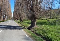 Förbi Uppgränna och längs vägen med de vackra träden och hagarna...