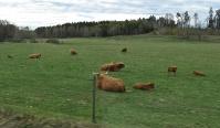 och vid Bönnorp såg vi dessa Highland cattle i sin hage...