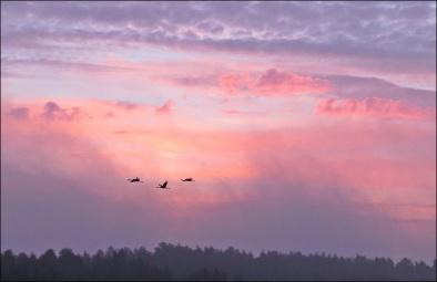 Tranor på väg en tidig morgon när solen går upp.