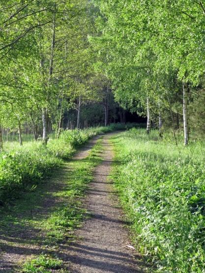 Skön promenadväg till skogen