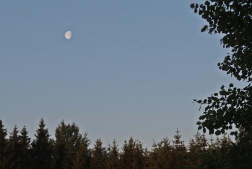 Månen fortfarande uppe över skogen åt andra hållet...
