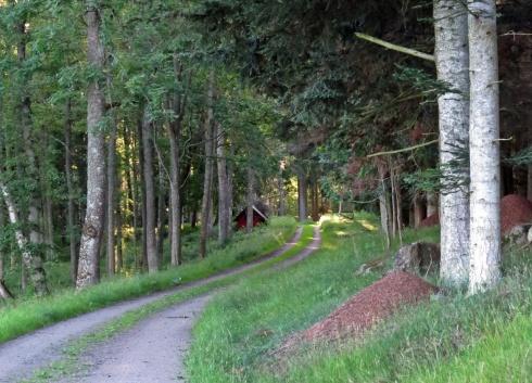 Vi följde vägen som går i utkanten av den s. k. Vildparken ...