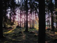 Solljuset ger skogen liv.