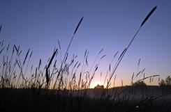 Solen på väg upp ... snart dags att slå vallen...