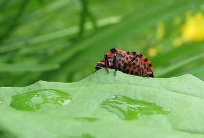 Strimlus ... en av mina favoriter :)