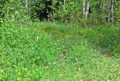 Kungsvägen var en gång landsvägen till Finspång. Första delen av vägen går över en liten glänta med blommor...