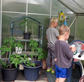 ... en ny lapp i växthuset ...