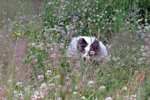 Fina Blinka gjorde sitt bästa för att inte fastna på bild och försökte gömma sig i gräset :