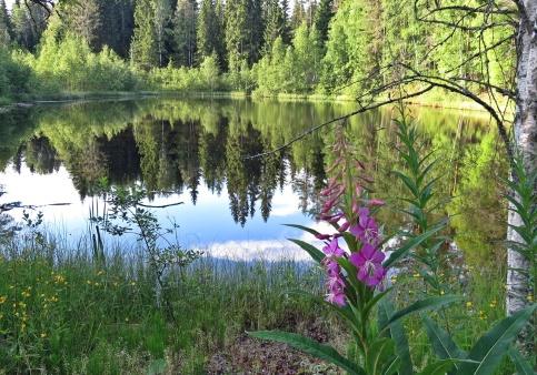 Så fint vid en annan liten sjö som jag passerade på vägen tillbaka till Älgsjökullen...