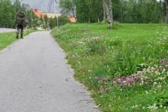 Fint när de lämnar blommorna kvar i sluttningen mellan gräsmattan och trottoaren.