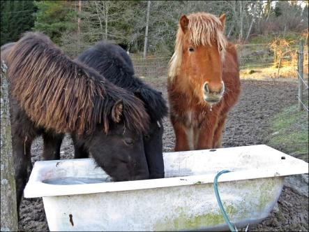 ... för hästar ...