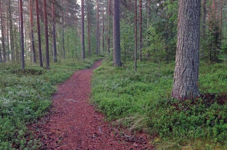 En bra stig genom skogen ...