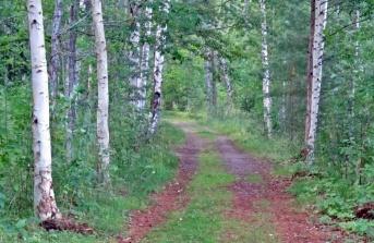 En fin väg som OM det kommer regn kommer att digna av svamp ... :)