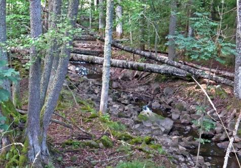 De svårtillgängliga hagarna och bäckravinen med lövträd - många gamla aspar - ser spännande ut!