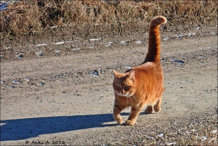 """Han är en vandrare ... och har flera gånger varit """"försvunnen"""", ibland ett par veckor, ibland ett par månader - en gång var han borta i nästan fem månader och så nu då när han varit borta i drygt tre månader ... men än så länge har han alltid kommit hem igen :)"""