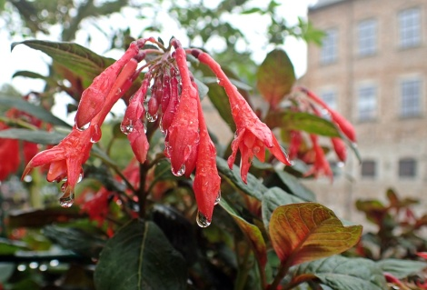 Vackra blommor efter regnet ...