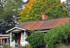 Den stora lönnen bakom vårt lilla hus börjar skifta i höstens färger.