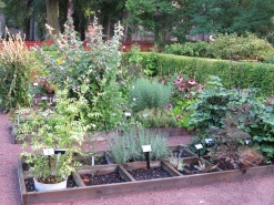 Örtagården med kryddor och medicinalväxter