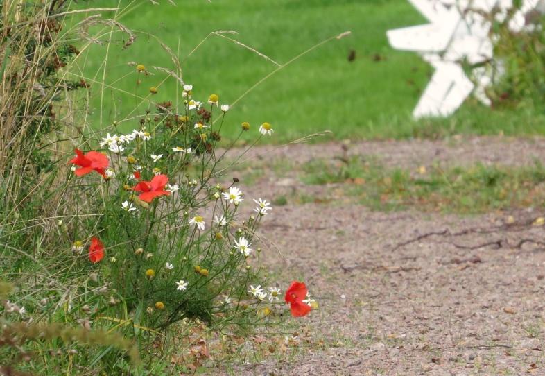 Sommarens sista blommor...