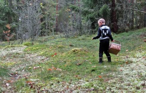 Ludvig spanar efter svamp...