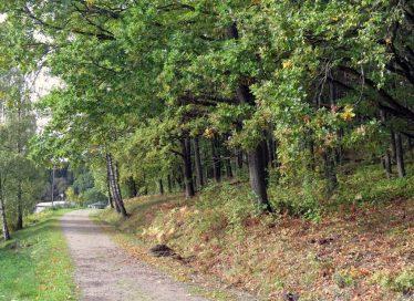 Vägen tillbaka till parkeringen - fortfarande är ekarna mest gröna, men nog ser man att det är höst när man ser under dem...