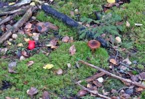 Jodå - jag hittade svampkniven ... bra med rött skaft :)