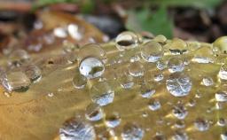 Efter regnet dröjer sig dropparna kvar på det nedfallna lövet.