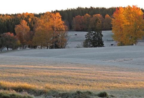Frostig morgon