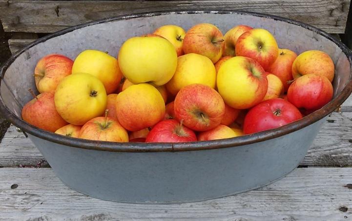 Äpplen är välbekanta frukter ...
