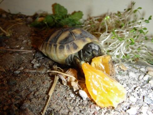 Clementiner är godis tycker Rutan ...