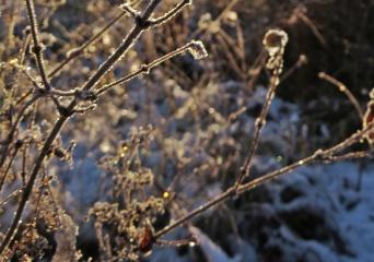 solens strålar gnistrar i de frusna vattendropparna