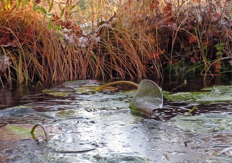 ny, tunn is på dammen