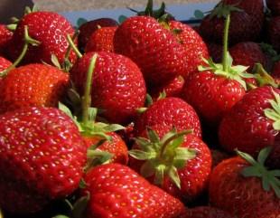"""Ur vetenskaplig synvinkel är jordgubben dock inte ett bär utan ett fruktförband med nötter, då de egentliga frukterna är """"bärets"""" gula prickar"""
