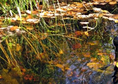 dammen bjuder på höstfägring. ... pumpen är upptagen och rengjord och får nu vila tills våren kommer