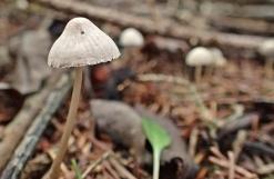 En annan liten tålig svamp ...