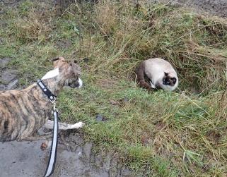 Vi mötte en av gårdskatterna på hemväg - hon verkade inte så sugen på att leka :)