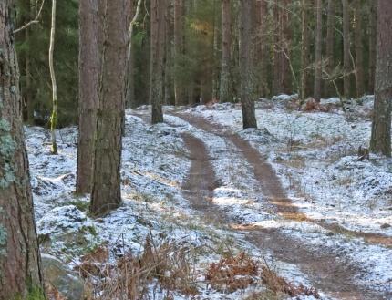 Den lilla skogsvägen...