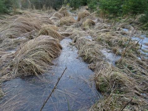 Här är de djupa spåren kvar efter skogsmaskinerna som tog sig fram här för många år sedan...