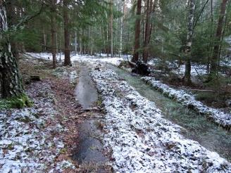 De djupa hjulspåren efter skogsmaskinerna som passerade här för flera år sedan är också fyllda med vatten ...