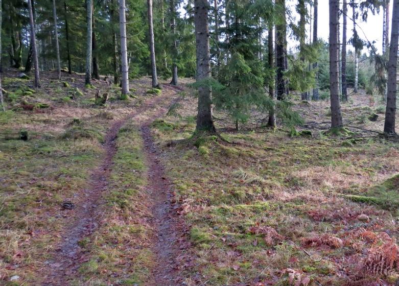 Fortsatte skogsvägen ...