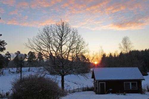 Soluppgång och klockan är 08.36 när solen orkar upp över skogen.