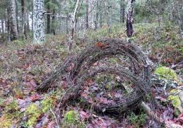 Det här gillar jag inte att hitta i skogen . taggtråd