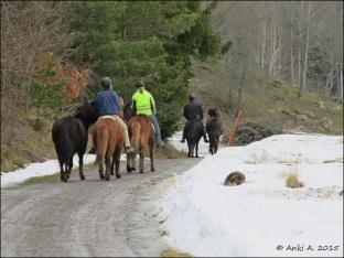 Hästarna bär sina ryttare ...