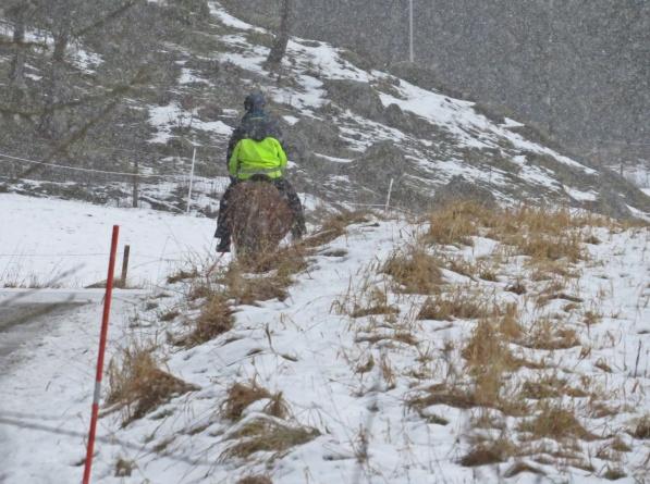 Gråruggigt och snö - ibland är man glad att man inte måste ge sig ut :)